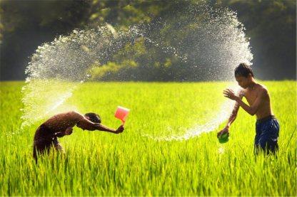 Ary Yiuniasti __ campo de arroz