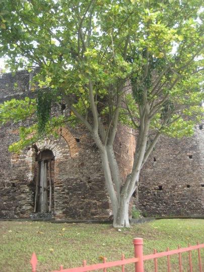 alagoinhas __ ruína sacra