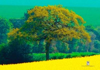 àrvore de mostarda